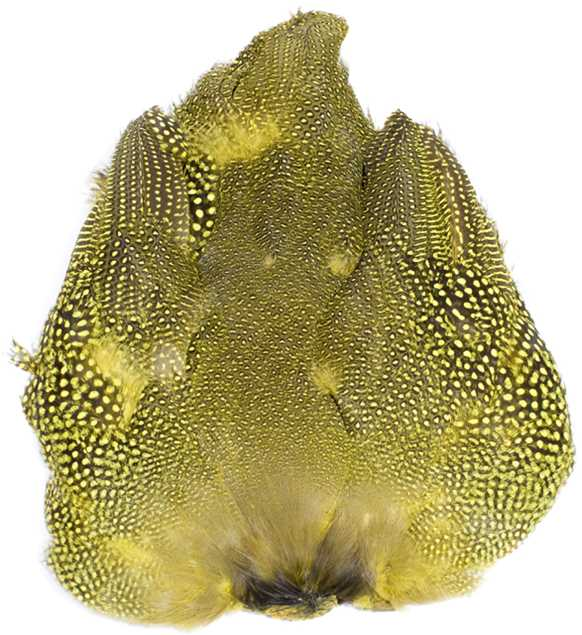 Bild på Guinea/Pärlhöna (helt skinn)