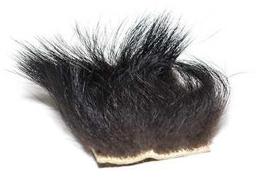 Bild på Svartbjörn (Black Bear)