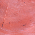 Bild på CDC Marc Petitjean (1 gram) Pink