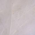 Bild på CDC Marc Petitjean (1 gram) White