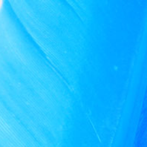 Bild på Duck Quill / Vingpenna And Blue