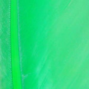 Bild på Duck Quill / Vingpenna And Green