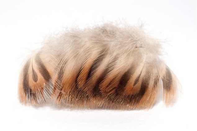 Bild på Gräsand bröstfjäder (E-12)