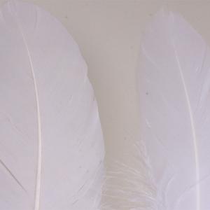 Bild på Gås Skulderfjäder / Goose Shoulder White