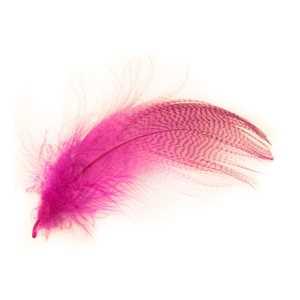 Bild på Grey Mallard Flank  Pink