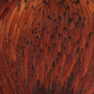 Bild på Indiska tuppnackar (A Grade) Brown