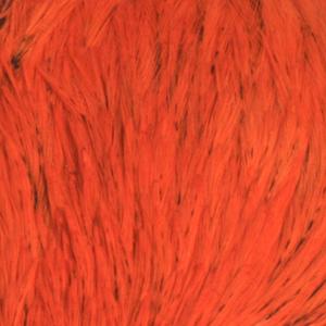 Bild på Indiska tuppnackar (A Grade) Orange