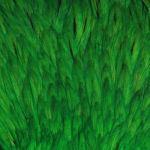 Bild på Indiska tuppnackar (A Grade) Green