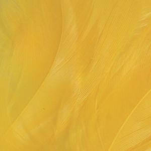 Bild på Lösa fjädrar från tuppsadel Yellow