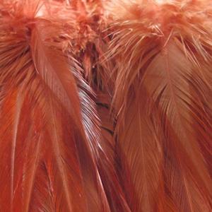 Bild på Lösa fjädrar från tuppsadel Brown