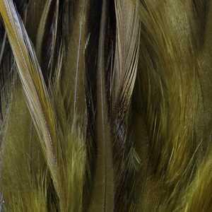 Bild på Lösa fjädrar från tuppsadel Olive