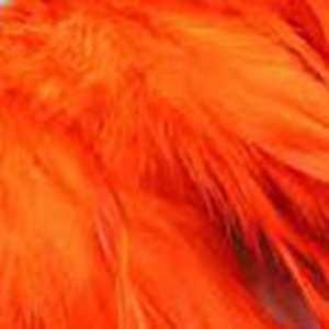 Bild på Tupphackel  Orange