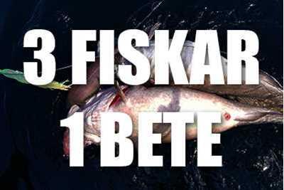 Stora lubbar, sejar & blåkexor på djups vatten   RAPPORT   Team EL-GE Havsfiske