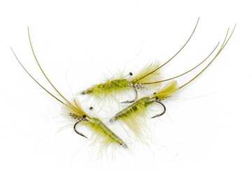 Bild på CDC Shrimp Olive #8