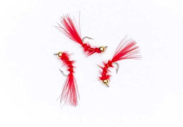 Bild på Blodworm m. guldskalle #10