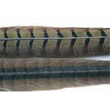 Bild på Fasantupp - mittre stjärtfjäder 1 par